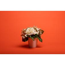 Superior #39 Bright Orange фон бумажный 2,72x11м цвет ярко-оранжевый